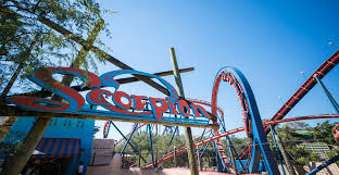 ride scorpion at busch gardens tampa bay