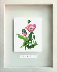 essay on medicinal plants medicinal plants essay by anti essays