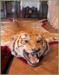 lion head rug tiger skin book exceptional fake with taxidermy real