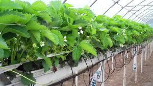 indoor gardening. Quick Guide To Hydroponics Indoor Gardening