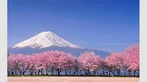Get Cherry Blossoms Microsoft Store