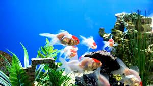 Fun Fish Tank Decorations How To Set Up A Freshwater Fish Tank Aquarium Care Youtube