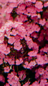Pink iPhone Background