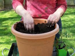 to plant vegetables in pots