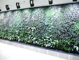hydroponic wall garden indoor wall garden herb wall garden ideas
