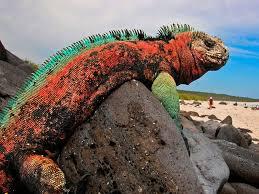 Image result for christmas iguana
