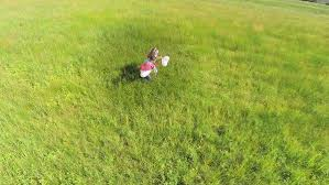 grass field aerial. Lovely Couple With Balloons Running On Grass Field. Aerial Slow Motion Shoot Of Boy And Field