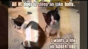 Worlds Funny Cat Quote