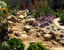 Small Picture Heres another dry creek garden planted with succulents to