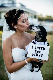 Stray Dog Crashes A Wedding And Finds His Own Happily Ever After ...