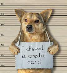 We did not find results for: 180 Credit Card Dog Photos Free Royalty Free Stock Photos From Dreamstime