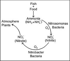 Unionized Ammonia Chart Ammonia The Fish Site