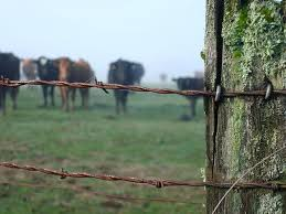 barbed wire fence cattle. Cattle Wire Fence Barb Cow Panel Panels . Barbed