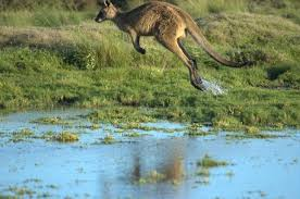logo with kangaroo in red triangle kangaroo wikiwand of logo with kangaroo in red triangle kangaroo