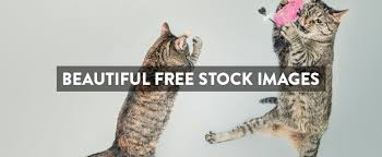 Free Stock Images: The Ultimate List of Stock Photos For Commercial