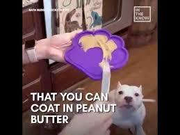 9gag peanut er bathtub attachment makes it easier to bathe your dog 9gag it