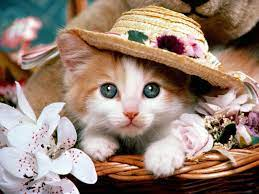 Pretty Cats Wallpapers - Top Free ...