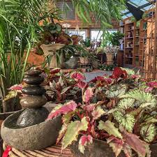 we stock small evergreen topiaries elegant indoor bloomers large leaf tropicals if there is something special you seek we will find it for you through