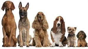 Resultado de imagem para cães