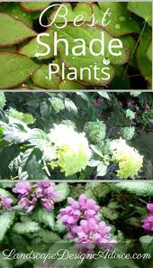 Small Picture 332 best Shade Garden Plants images on Pinterest Garden ideas