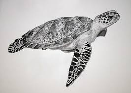 Small Picture Turtle Drawing