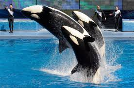 New SeaWorld ads confront aftermath of Blackfish documentary - The ...