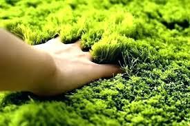 rug that looks like grass green floor rug that looks like grass marvelous carpets indoor full