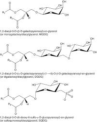 chemical diversity of lipids springerlink