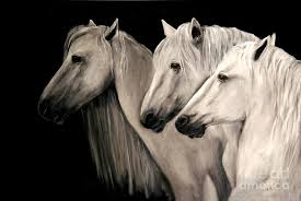 horses painting three white horses by nancy bradley