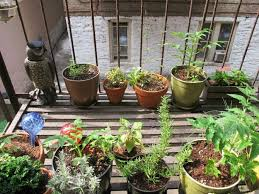 apartment gardening. Plain Gardening Fire Escape Garden Editedjpg Inside Apartment Gardening