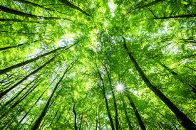 Image result for environment image of the week