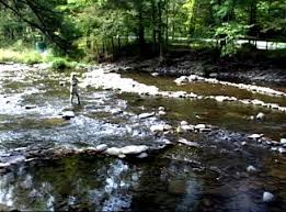 Fly Fishing Gear And Trout Flies For The Beaverkill River