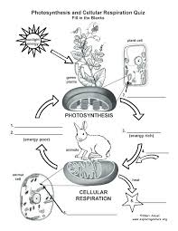 Venn Diagram Photosynthesis And Cellular Respiration Respiratory Diagram Worksheet Michaelhannan Co