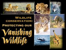 essay on wildlife conservation efforts in short essay on wildlife 200 s wildlife is both rich and varied it wildlife conservation encompasses all human activities and efforts directed