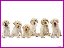 Dog Wallpaper Uk - Buy Dogs Online ...