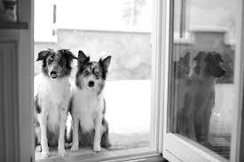doggie doors for house