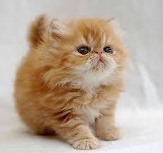 petco cats for sale. Unique Cats Adoption Day U2013 Hartsdale PetCo With Petco Cats For Sale A