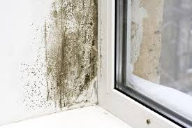 condensation damp mould centre for