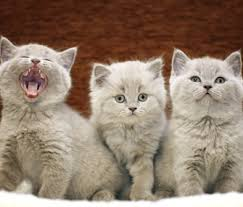 cats and kittens pictures. Simple Kittens Throughout Cats And Kittens Pictures M