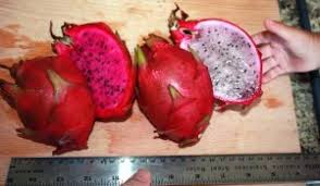 How To Prepare A Dragon Fruit Cutting For Planting  Home Guides How To Take Care Of Dragon Fruit Tree