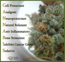 healing qualities of cannabis oil