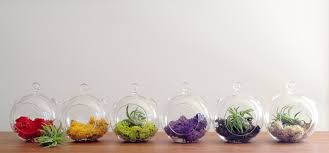 incredible ideas hanging terrariums stunning decoration decor