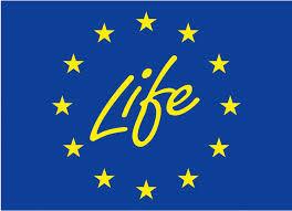 enfo enfo news 2018 12 23 113505 life logo jpg