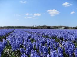 Blue Hyacinth Body Wash