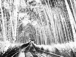 嵯峨野竹林の小径雪 By 文香パパ3 Id4076079 写真共有サイト
