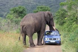 Top 7 DON'TS of a Self Drive Kruger Safari – Safari With Pieter