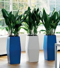 office plant pots. indoor plant pots of different varieties that you can place your houseplants in will help elevate the aesthetic appeal living space office l