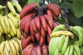 The Benefits Of Red Banana Vs Yellow Are Unexpected