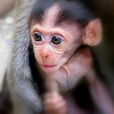 learn something new about evolution by watching these baby monkeys smile