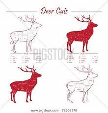Deer Meat Cut Scheme Vector Photo Free Trial Bigstock